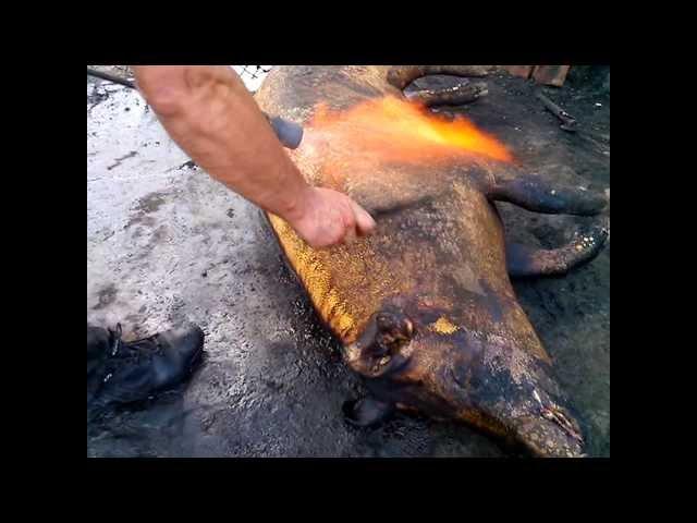 Как сделать мягким мясо дикого кабана