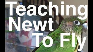 Teaching A Bird To Fly | Flock Talks