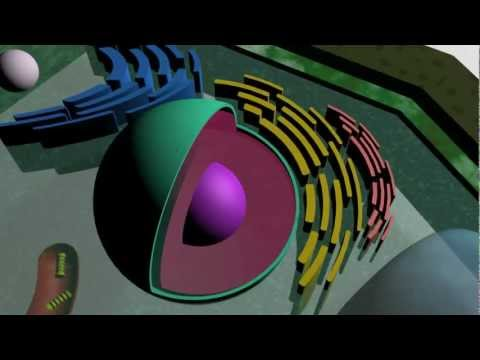 Images of Plant Cells 3d ▶ 3d Plant Cell Youtube