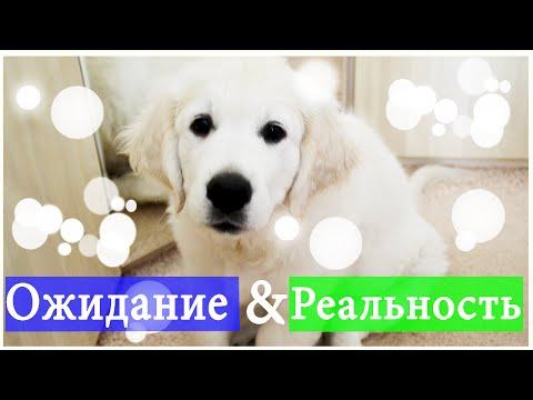 Ожидание & реальность// Жизнь с собакой
