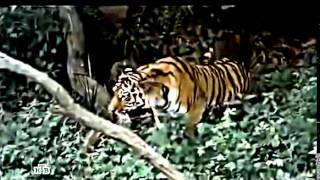 Russian Action movie - Hunting Tiger