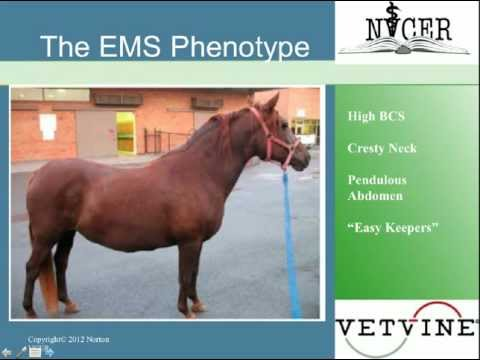 Equine Metabolic Syndrome