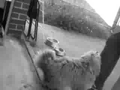 Jim Seducing My Dog. video