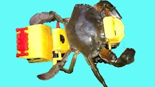 Truck with crab for kids | The ABC Song | ABC Songs for Children - Teen Kids TV
