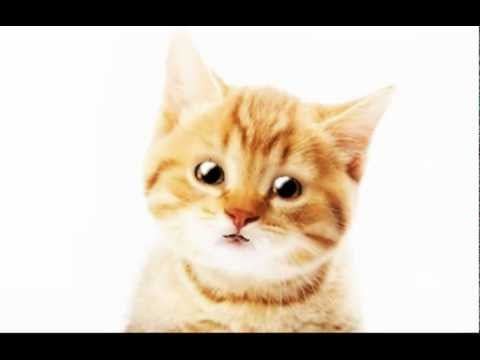 Munbe Vaa En Anbe Vaa - Cat Singing Tamil Song [funny] video