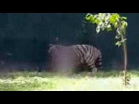 Death in Delhi zoo