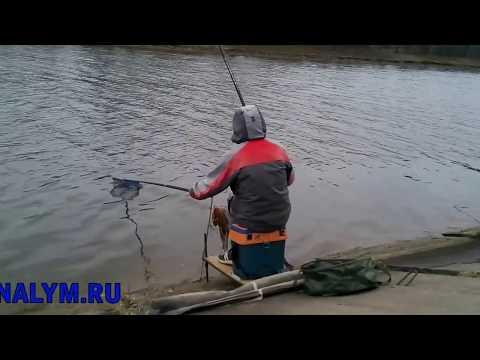 рыбалка на канале имени москвы 2017