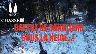 Battue de Sangliers sous la neige...! Chasse en Battue avec la Blaser R8