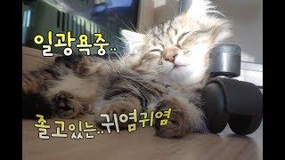 일광욕하며 낮잠자는 고양이 근접촬영(no talking) A cat sleeps sunbathing. 日光浴している途中眠っている猫