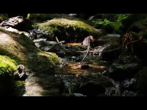 Steady Heart Lyric Video - Steffany Gretzinger