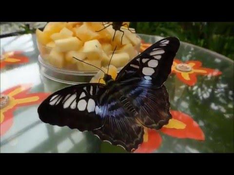 Tropische Schmetterlinge Bis Zum 13. März 2016 Im Botanischen Garten München