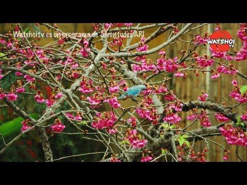 Crónicas Nikkei: Jardín Japonés