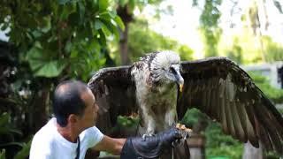 Các loài chim ăn thịt trẻ em nên tránh xa - Dạy bé nhận biết các loài chim ăn thịt
