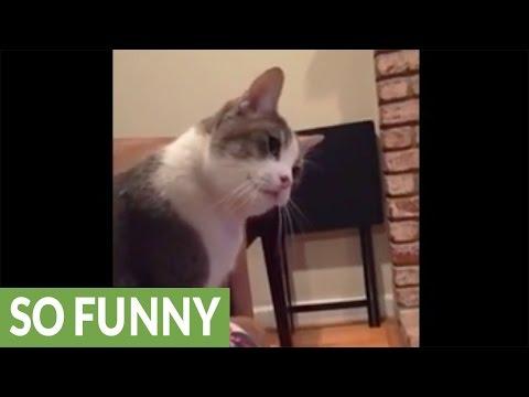首を右左にかしげて見る猫が超絶可愛すぎる☆