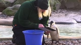 London Zoo Begins Annual Animal Stocktake
