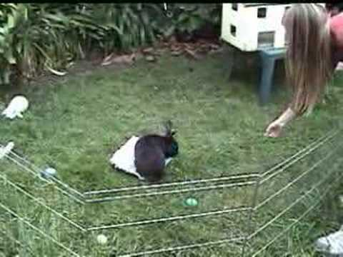 Amazing bunny tricks