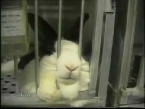 Animal Testing - Good Science? Or Pointless Cruelty? Part 1