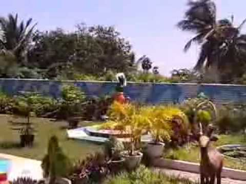 Sri Lanka Chavakacheri near Palamuthirsolai (video clip 5.10.2013)