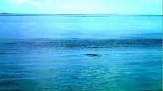 Dolphins Frolicking in Naples Pier