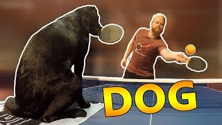 Ping Pong with Tira the Dog