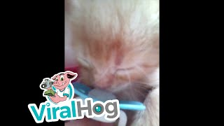 Rescued Kitten Loves his Pacifier