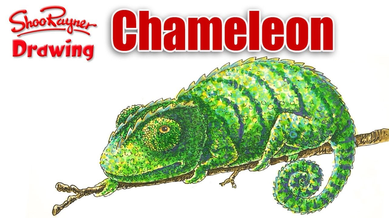 How to draw a Chameleon - YouTube