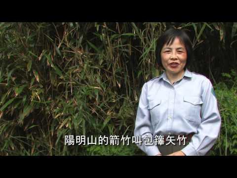 陽明山國家公園_芒草與箭竹