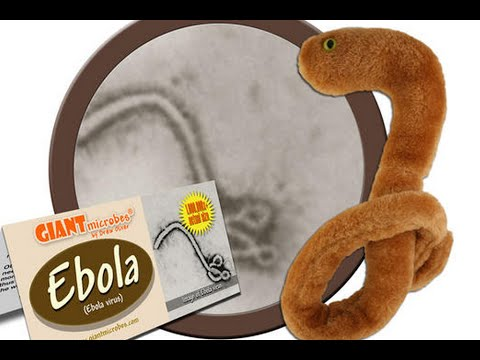 Cuddly Ebola Toys Are Flying Off The Shelves