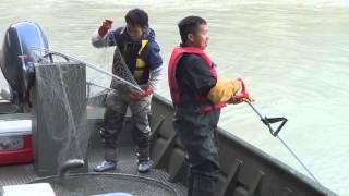 Hmong Alaska yawm ntses #2