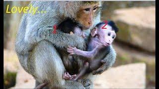 MG- So Strange Monkey Elsa Got Two Babies Monkey | Two In One & So Lovely
