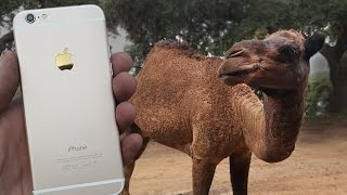 Camel vs iPhone