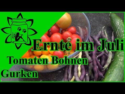 Ernte im Juli | Tomaten Gurken Bohnen | Garten Gemüse aus Töpfen und Hochbeet