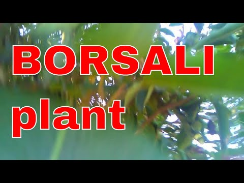 Borsali Plants intro in Farm visit