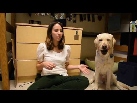 College Dorm Tour--Guide Dog Style