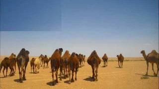 الفنان سيف النصر [ اليوم ضميهــــا ]