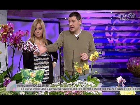 Come potare le orchidee