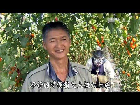台綜-農夫與他的田-20160328 冬日暖陽橙蜜香