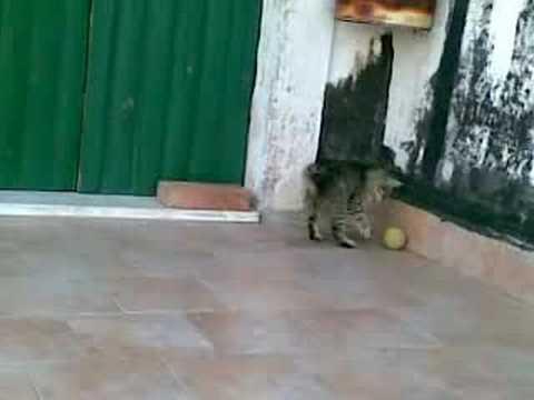 Tigrotto alla palla