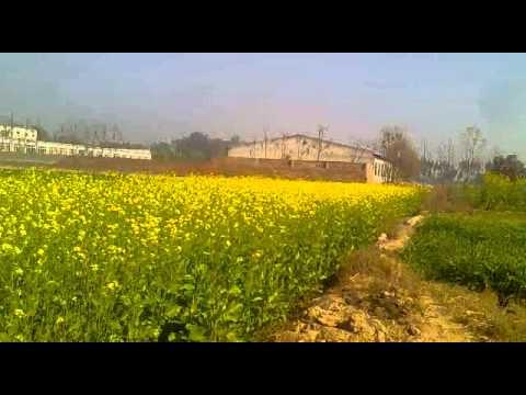 Yo Yo Hanny Singh [ 9872104019 ] video