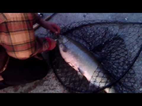 UFN Milwaukee Salmon fishing 2