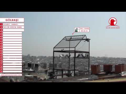 Posta Güvercin Yarışı 2015 Gölbaşı Yarış Videosu