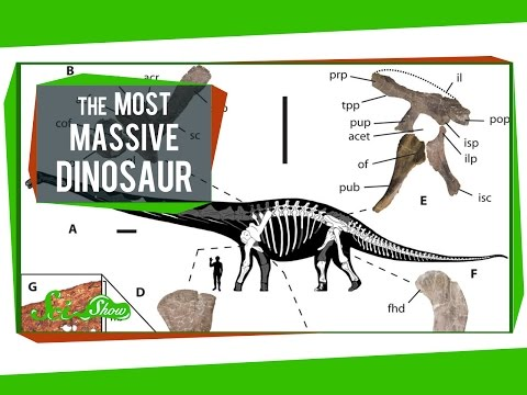 The Most Massive Dinosaur, and Are Earthquakes Contagious?
