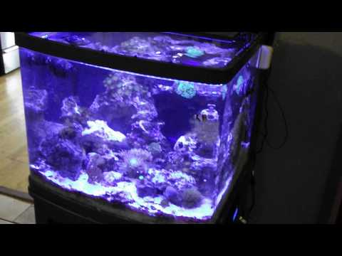 biocube 29 ugrades current usa orbit marine led plus more pt1 how