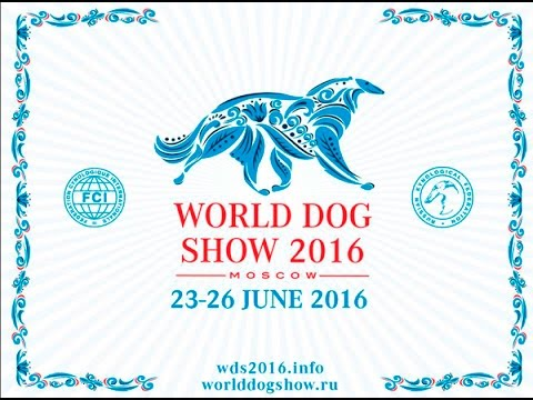 World Dog Show 2016 Moscow Part 1