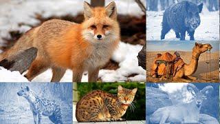 Tiếng kêu và hình ảnh các con vật cho bé   Con vật hoang dã   P2
