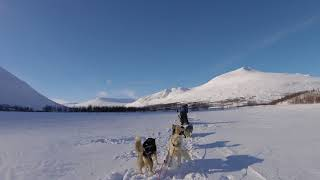 Dog Mushing, Kings Trail