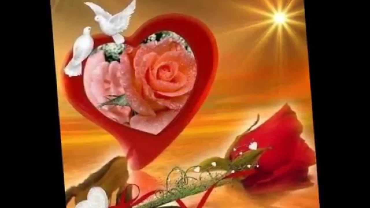 Te regalo una rosa la mas hermosa la mas bella de todas - Fotos de flores bonitas ...