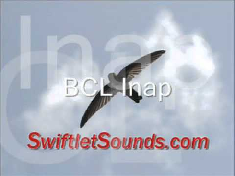 Swiftlet Sounds Collection Bcl Inap Internal Sound video