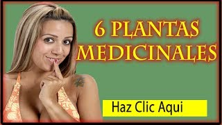 Plantas Medicinales: 6 Plantas Medicinales que no deben faltar en tu hogar
