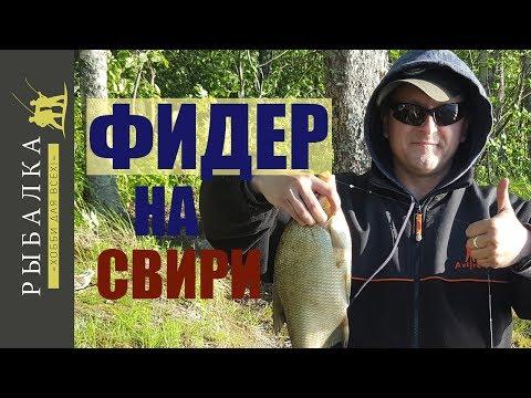 рыбалка на свири видео 2016